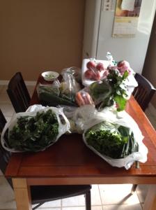 My Vegetable Haul