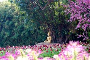 Bhuddist Garden