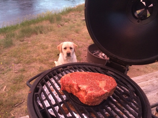 Dog Want Steak
